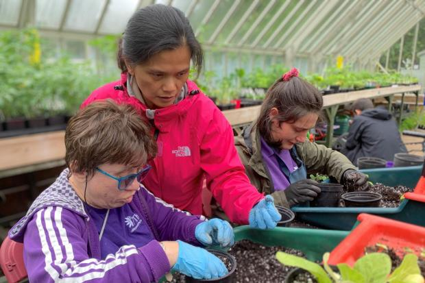 How horticultural therapy could benefit your physical and mental health