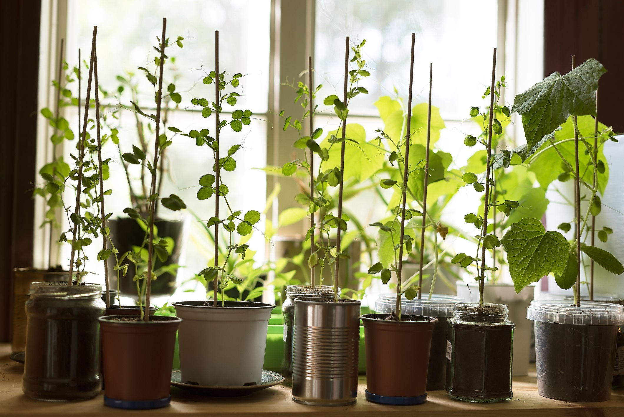 How to 'grow your own' in the smallest of spaces (even if you don't have a garden)