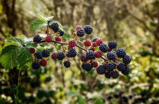 Douglas Mills is concerned about the growth of brambles in public access areas