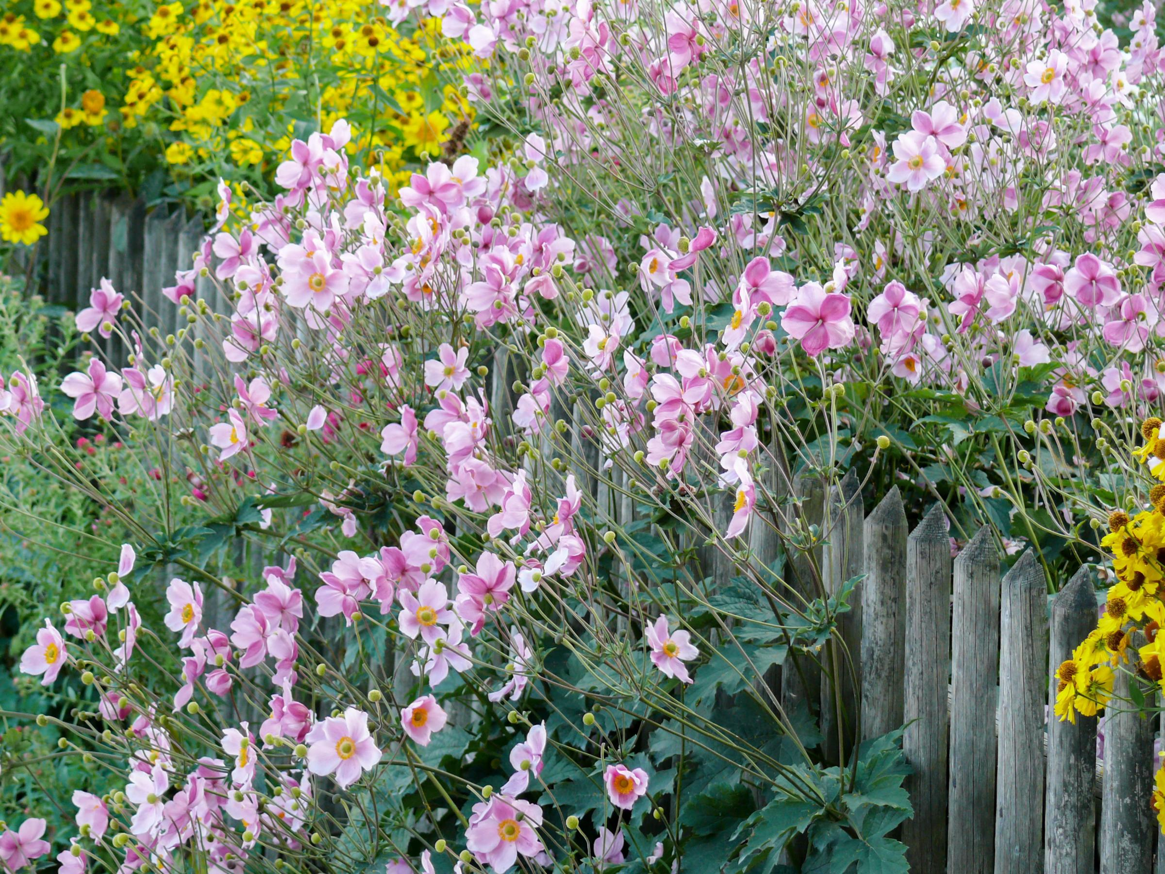 Gardening: Four common plants which may want to take over your garden