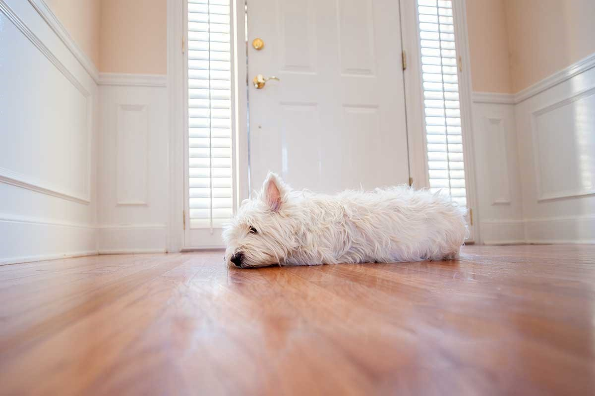 How to help your pet avoid separation anxiety