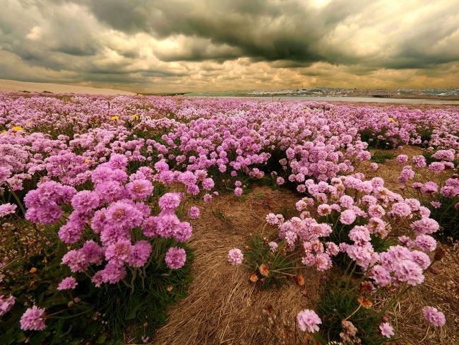 Echo Camera Club Dorset pictures. 