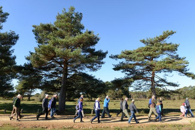 Walkers enjoying a ramble in the New Forest