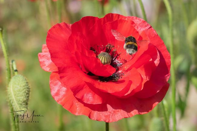 Picture of the Day: Bee red-dy for action