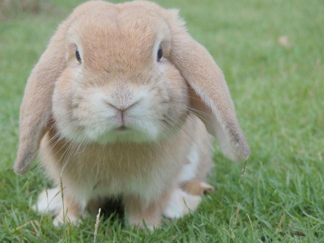 Rabbit owners urged to vaccinate against new strain of virus.