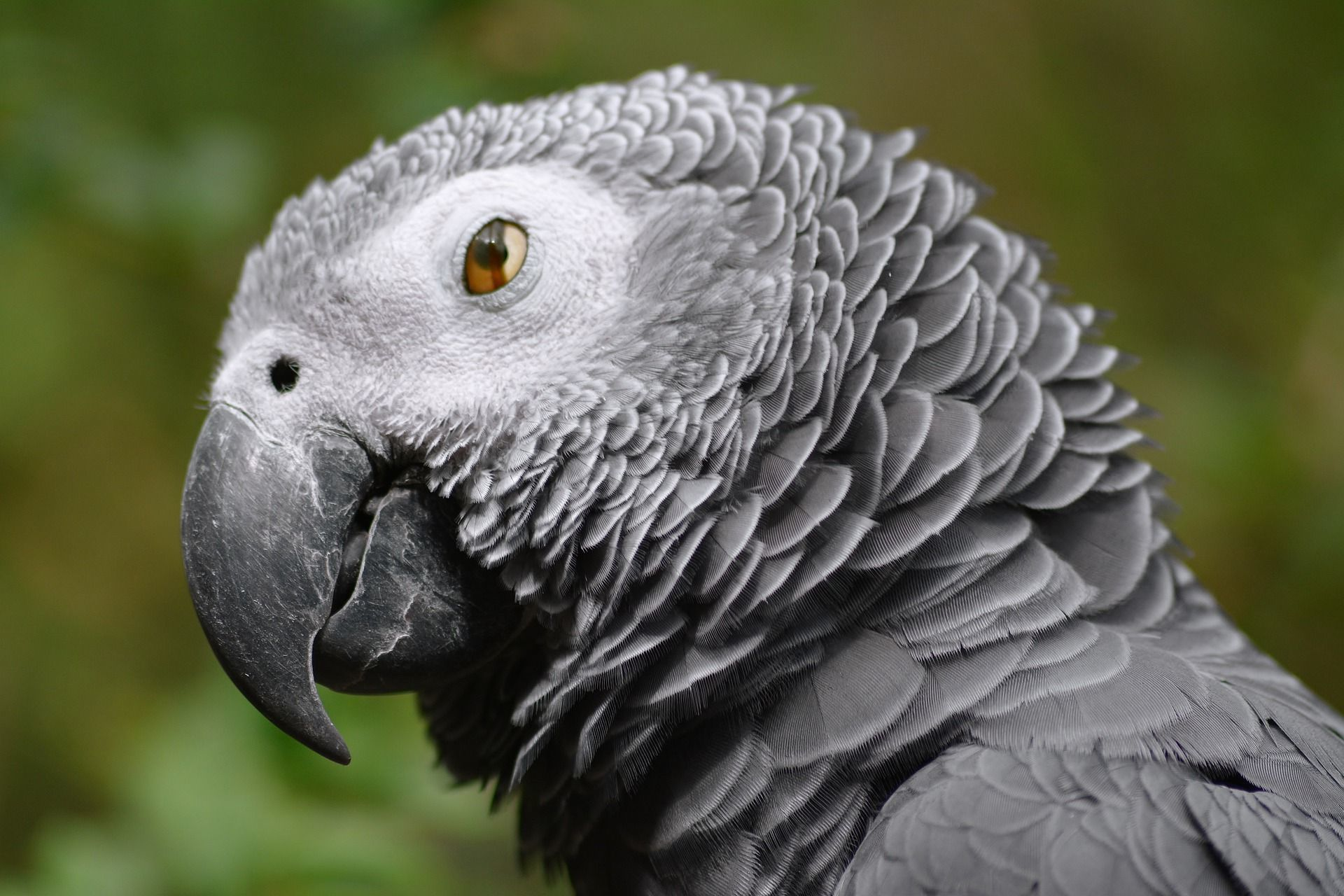 Nine parrots stolen from Burton