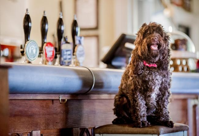 It's official! The Grove Arms is the most dog friendly pub in Dorset