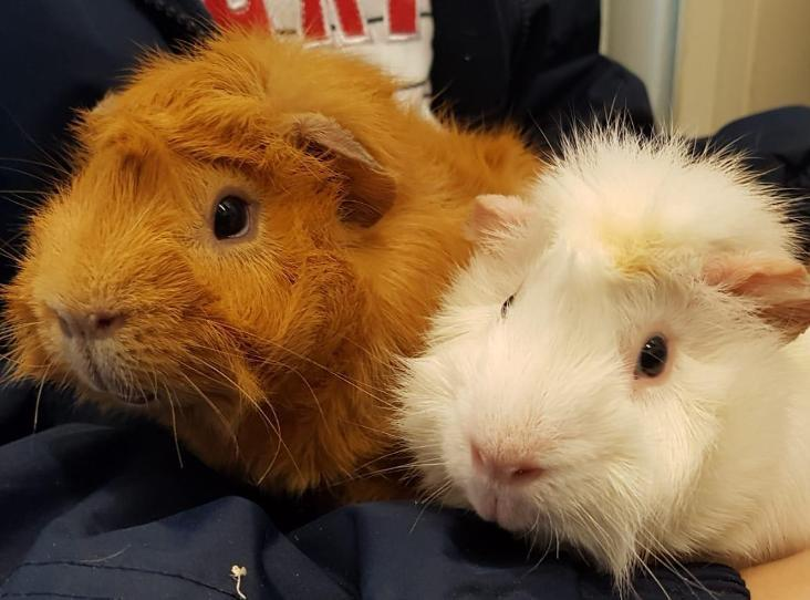 Stop buying small furries as 'starter pets' RSPCA says