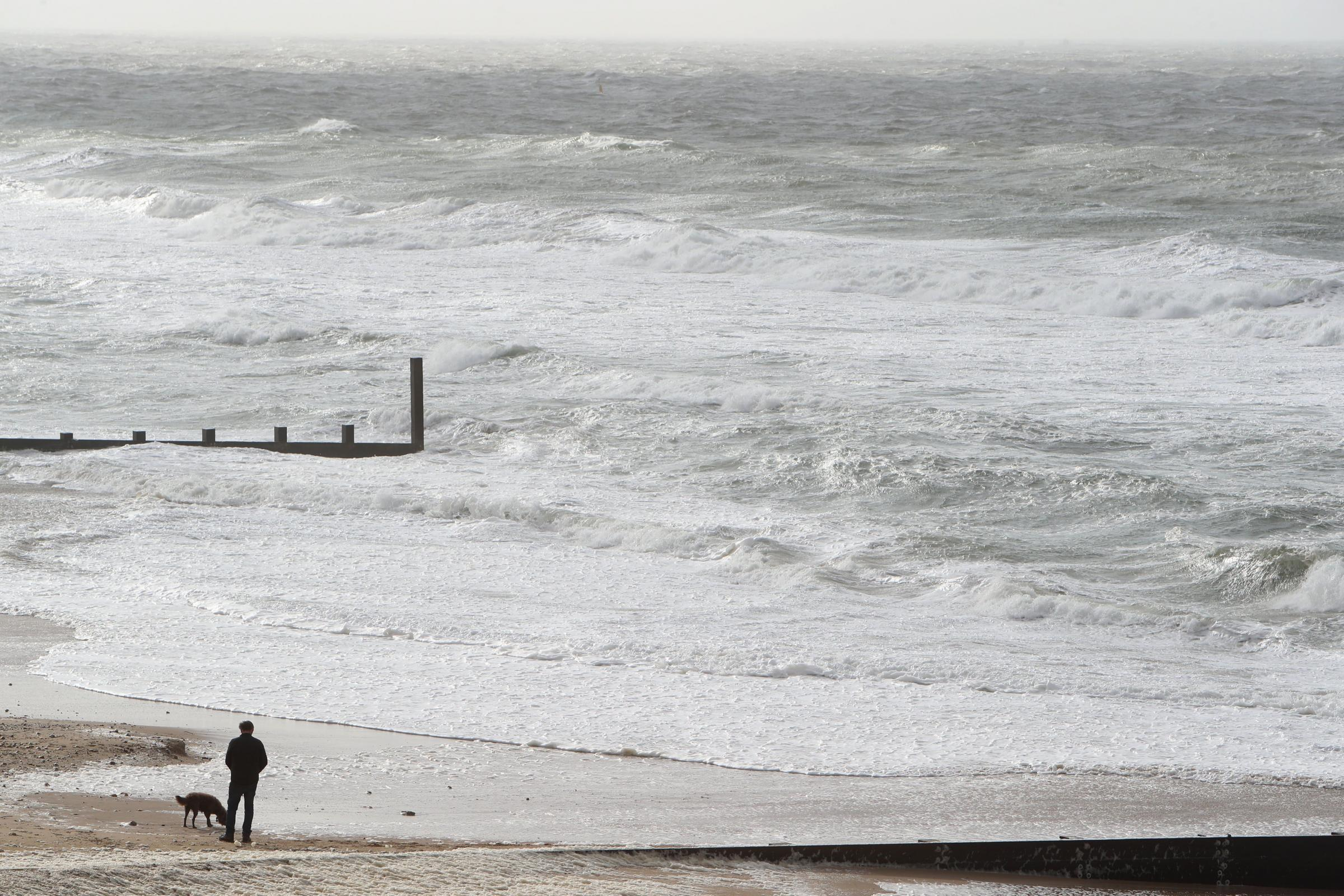 Trees down, trains restricted and roads blocked as strong winds hit Dorset