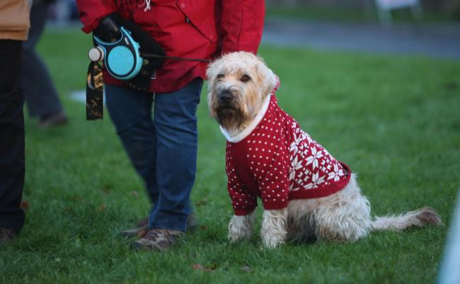 Dogs will be encouraged to wear festive jumpers in the run up to Christmas