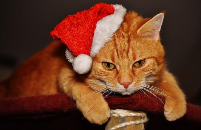 Festive pet selfies: we want to see yours