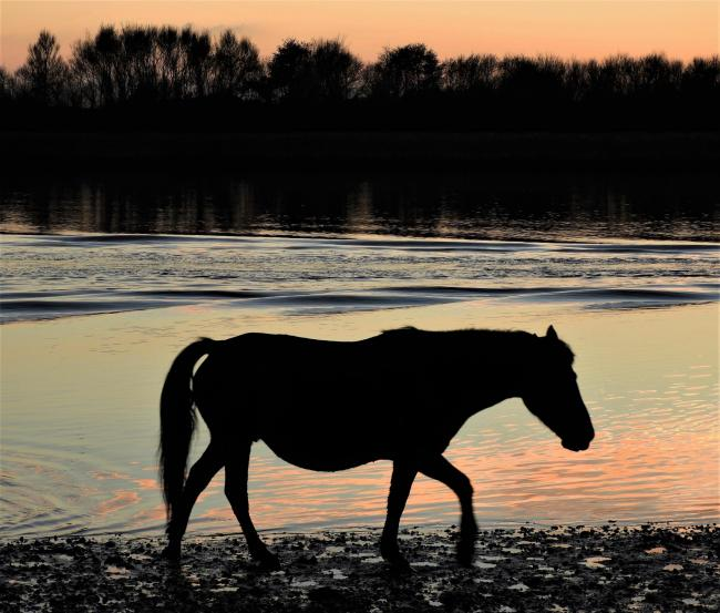 Echo Camera Club Dorset picture. A pony at Stanpit Marsh. Picture by Julia Rosser.