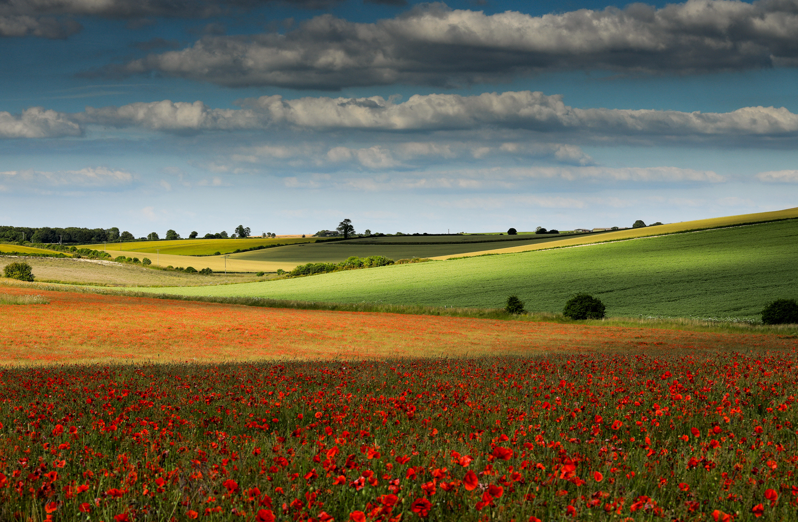 Poppy field in Six Penny Handley shot by Matt Pinner nominated for British Photography Awards