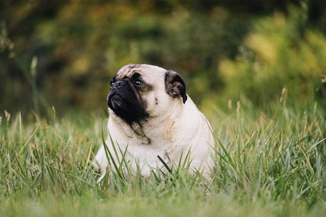 More than half of dogs in the UK are overweight.