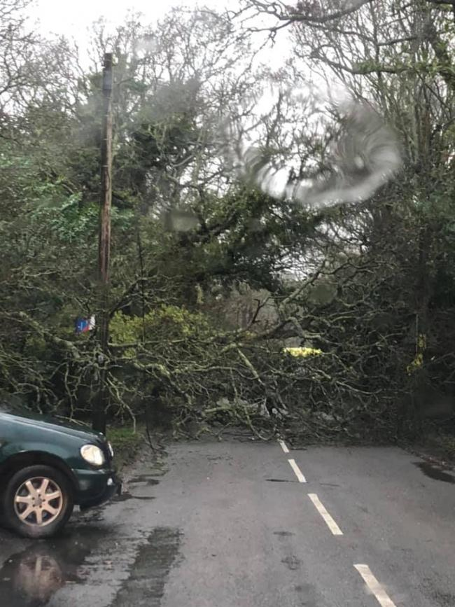 The tree fell in Hordle (pic: Alex Tindle)