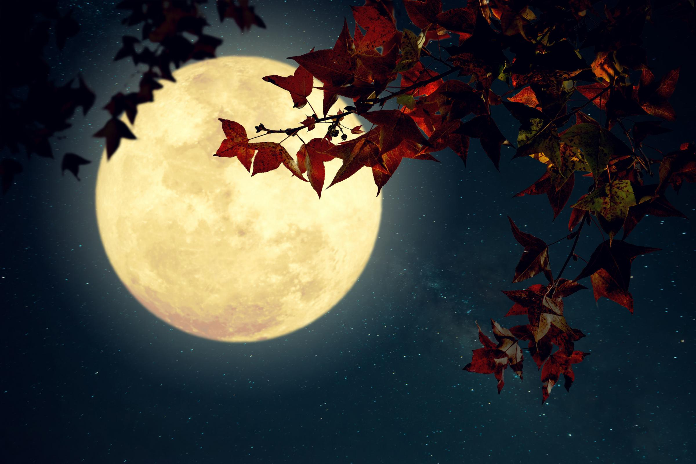 Lunar gardening: How to harness the power of the moon in your garden