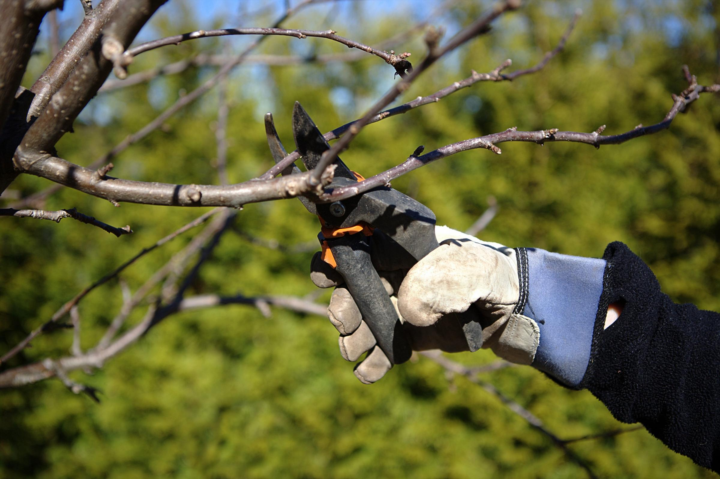 Gardening: What to prune now (and what to avoid pruning)