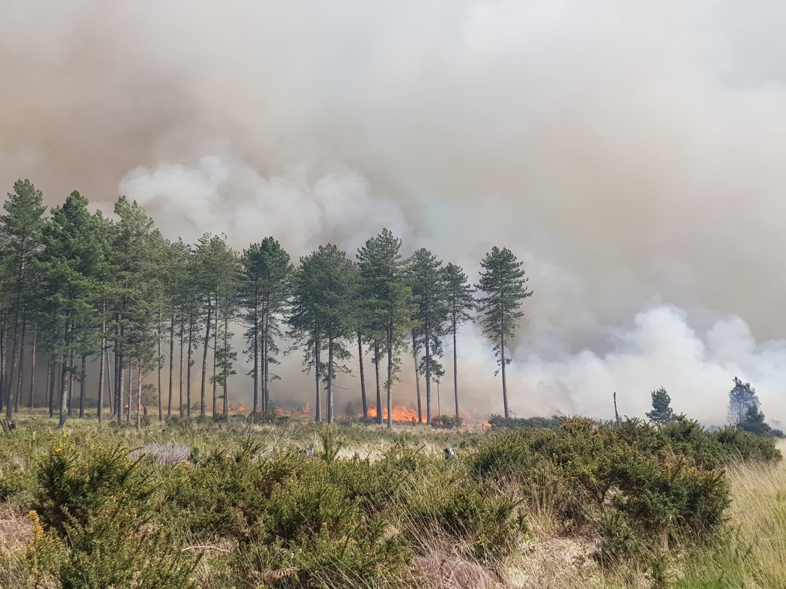 """""""The fire was in direct line with our house"""": Family evacuated due to Wareham Forest fire"""
