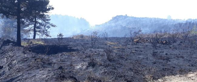 A disposable barbecue is a likely cause of the devastating fire at Wareham Forest. Picture: Forestry England