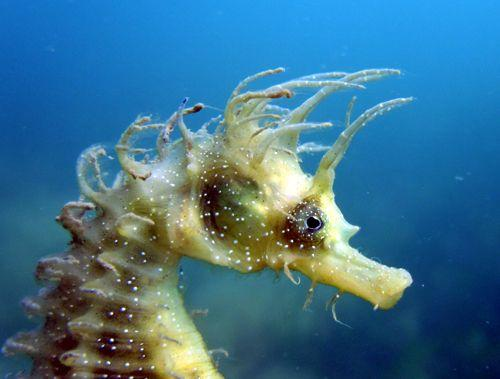 Seahorse numbers at 12-year high due to fewer boats and people during lockdown