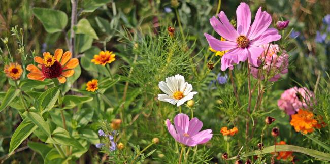Letter to the Editor: Please come and take wildflower seeds