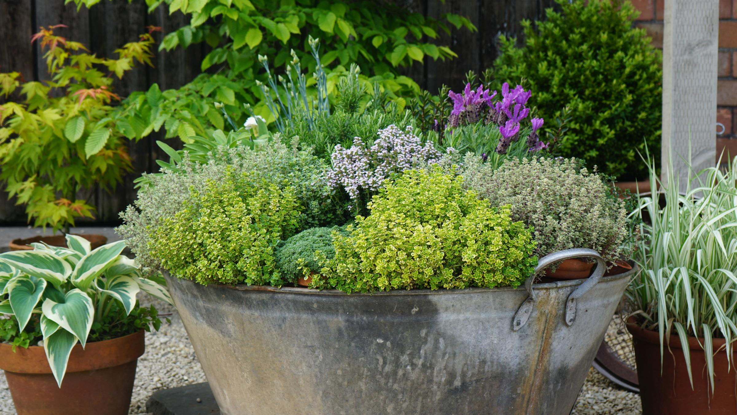 Gardening: How to combine vegetables and flowers for a pretty display