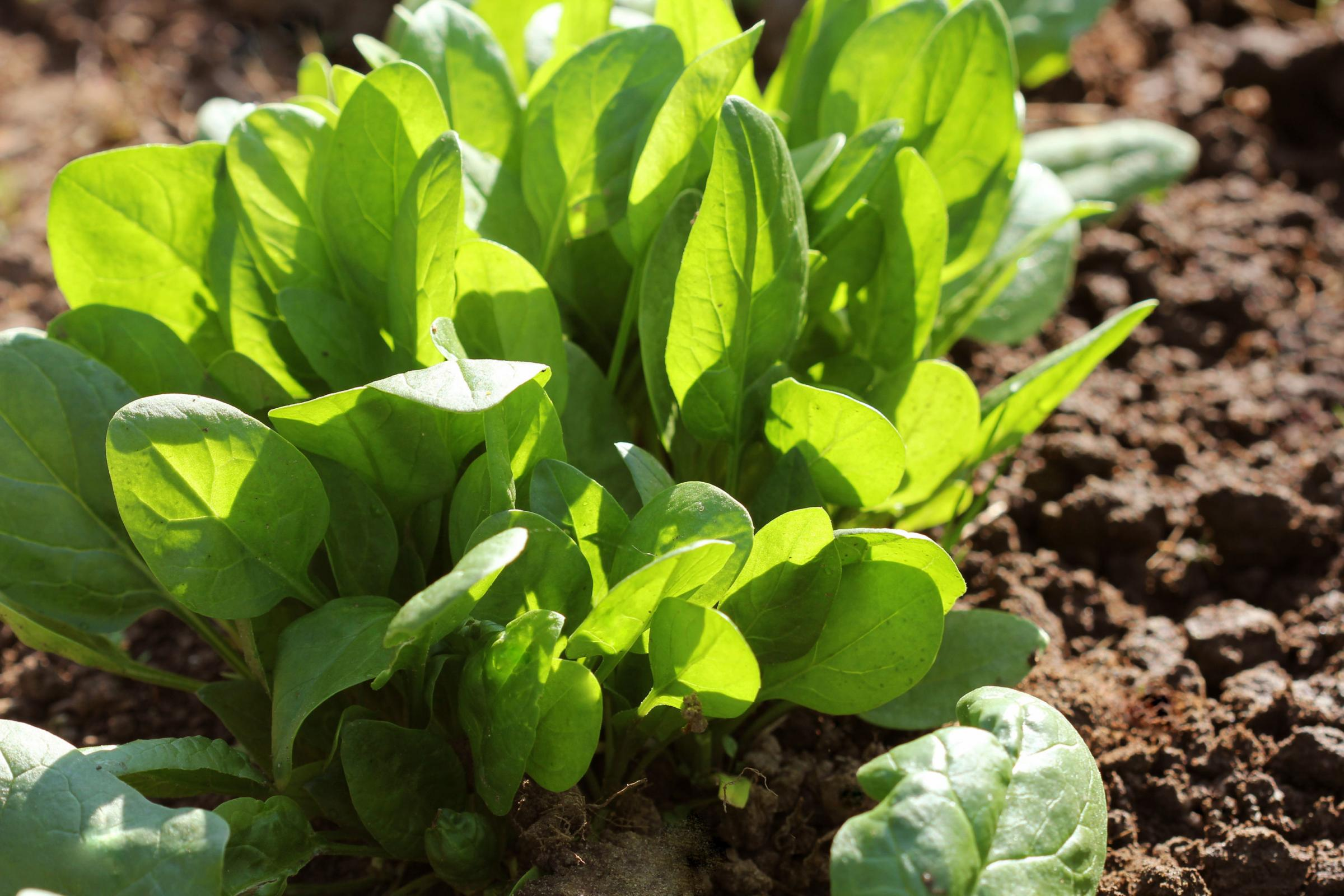 Six veg seeds you can sow now for a harvest in autumn and winter
