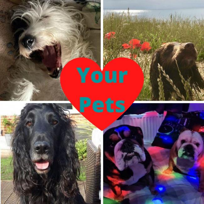 Animal Magic: We are shining a light on your pets from Bournemouth, Poole and Christchurch