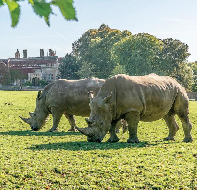 WIN: A family ticket to Marwell Zoo!