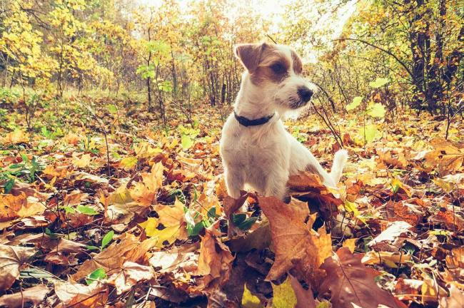 Pet owners are being urged to be aware of the seasonal dangers to their pets.