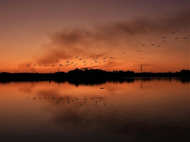 A flock of birds in flight as the sun sets over Longham Lakes, captured by Echo Camera Club member Julia Rosser.