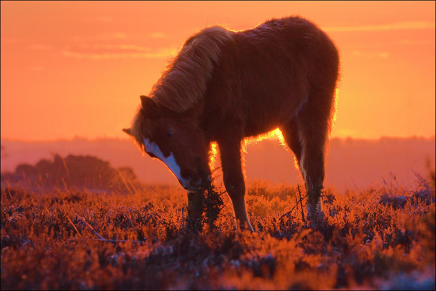Sunrise Foal, by Paul Lee