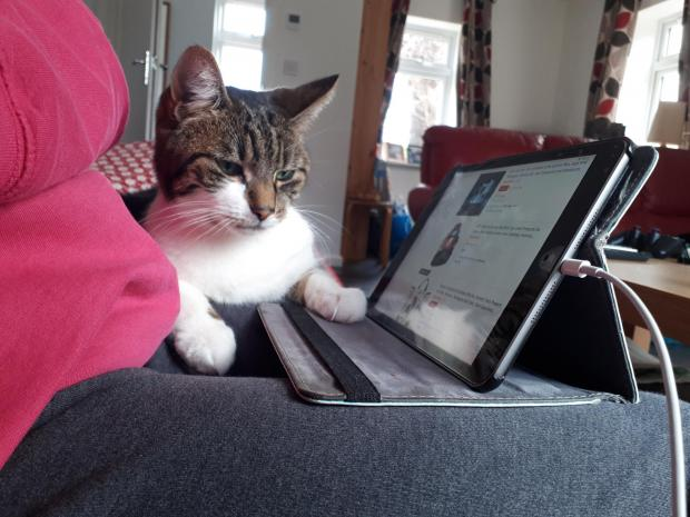 Bournemouth Echo: Chilli from Wimborne loves watching leaves through the window when not getting to grips with the computer says Miranda Portwood