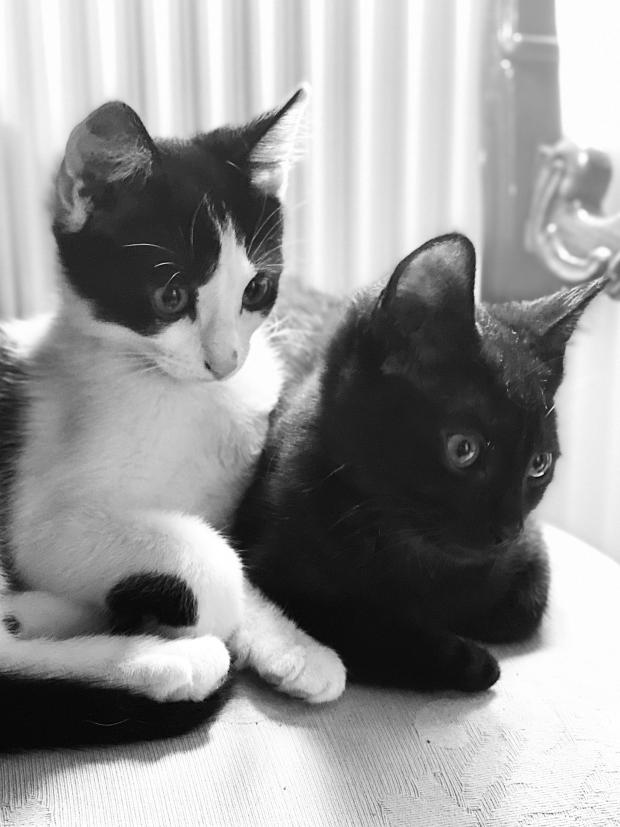 Bournemouth Echo: Lockdown kittens Marmite and Cookie who have each other to hug
