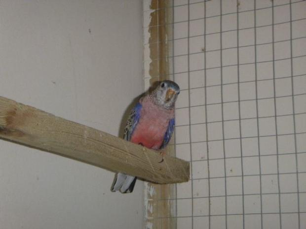 Bournemouth Echo: One of the three living birds found at the flat. Picture: RSPCA