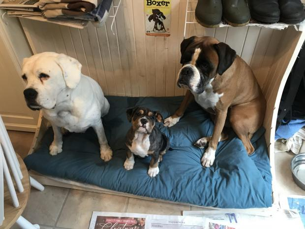 Bournemouth Echo: Woody and Yoda love their daily walks in the forest and have now been joined by new addition, Betty, says Sue Rushforth in Burton.