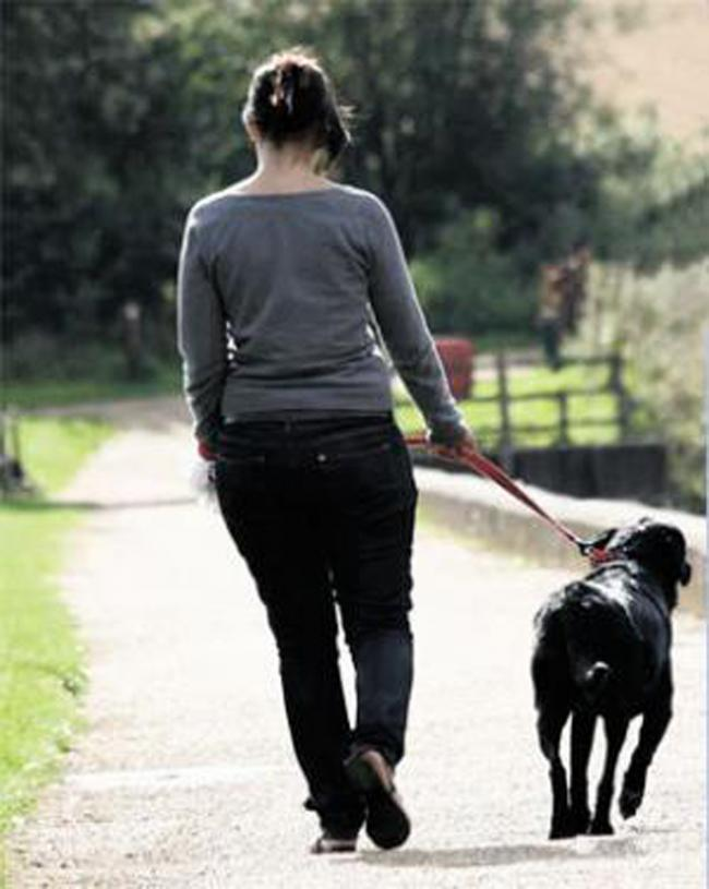 Keeping dogs on a lead is the neighbourly way