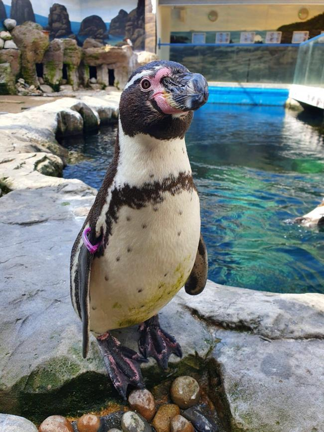 Philippa the penguin has moved to the Oceanarium in Bournemouth. She is named after The Duke of Edinburgh