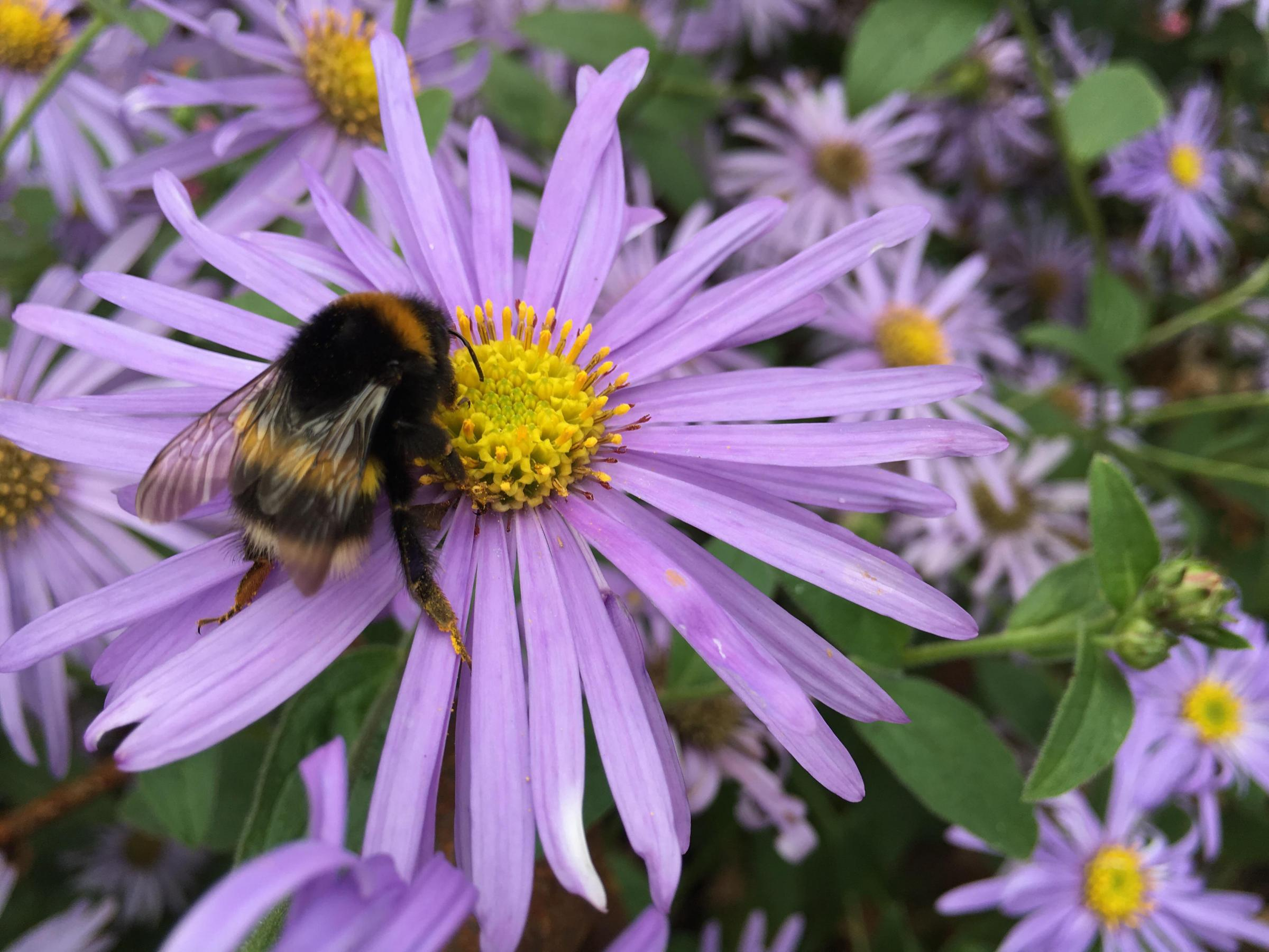 Bee-friendly plants to attract bees to your garden all year round