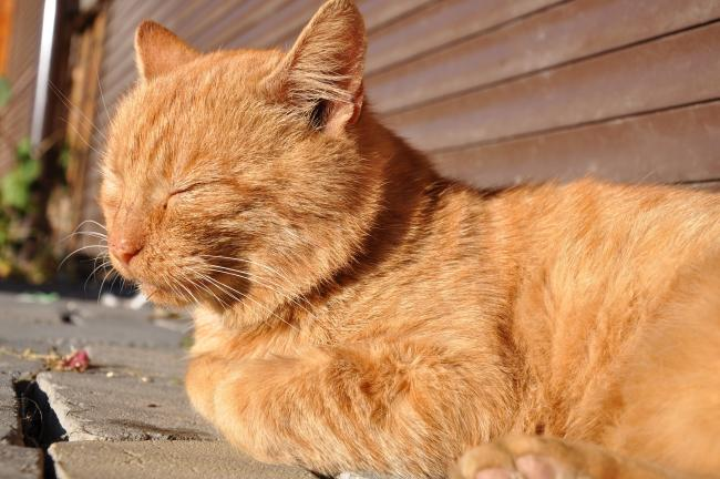 Letter to the Editor: Protect your cats from the sun