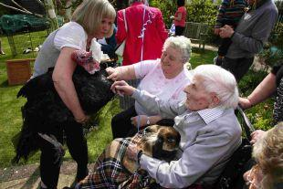BIRTHDAY GATHERING: Harry Futcher cuddles Sable the rabbit and with his eldest daughter Sylvia, 84, meets a turkey