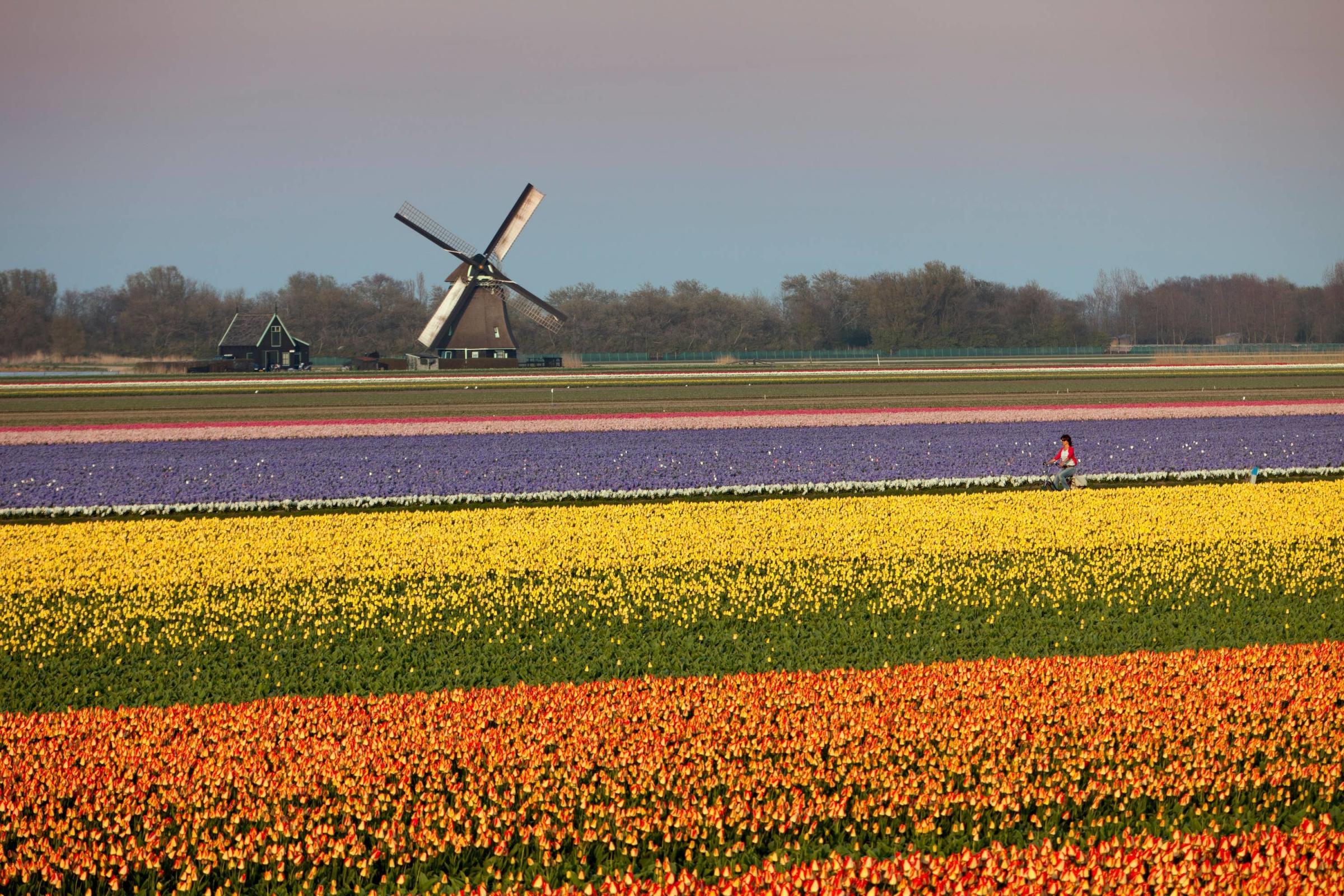 7 redenen voor uw huwelijksreis in Nederland zoals Haryana Grande