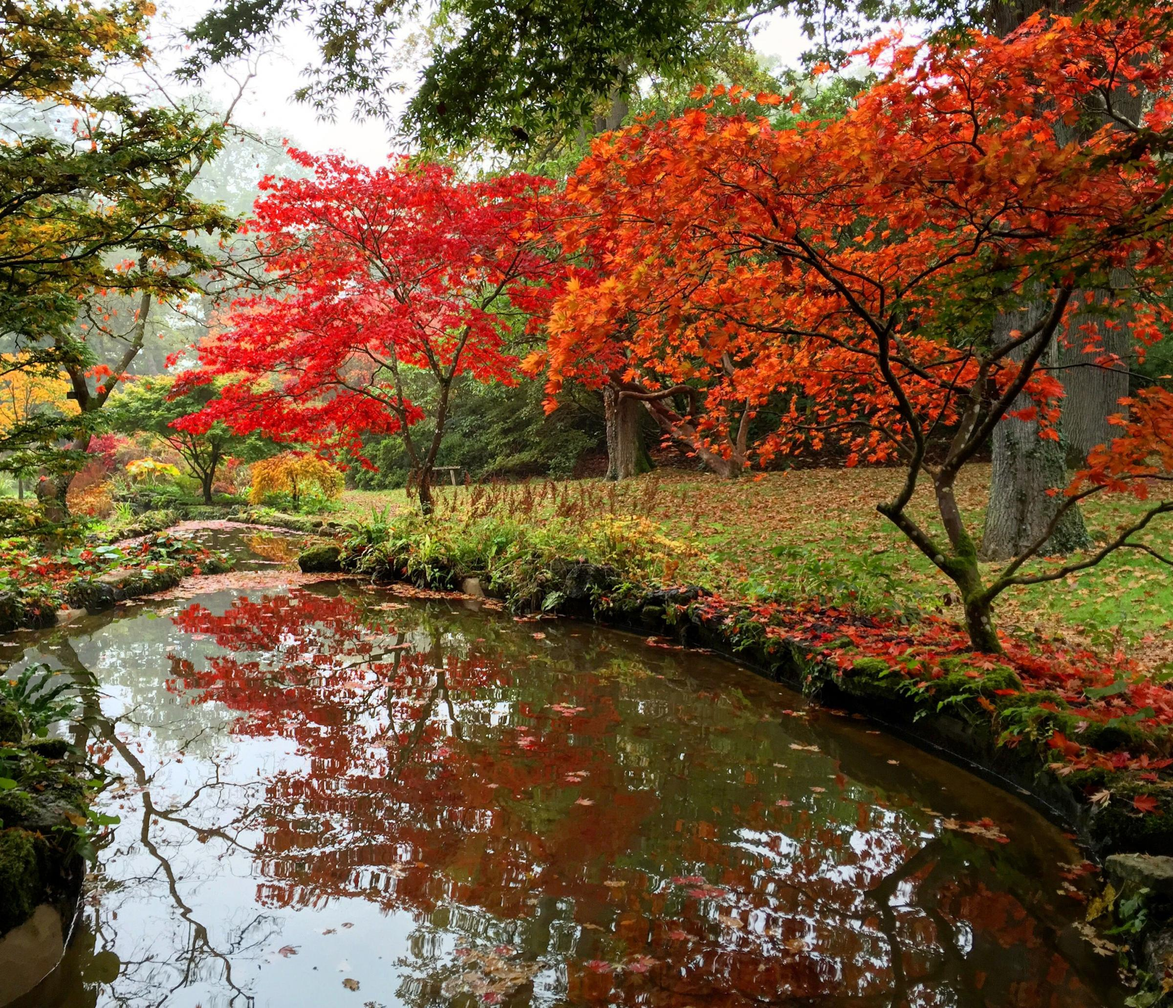Nine gardens to visit for dazzling autumn colours