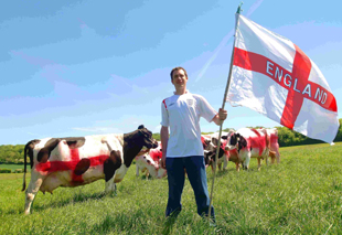 ENGLAND JERSEYS? Er, no, they're Friesians pictured with dairy farmer Robert Tory