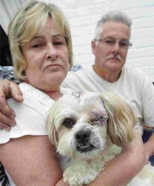HORROR INJURY: Paul and Angela Carter with pet shih tzu Sam who lost an eye in the attack
