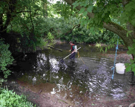 Fisheries Technical Officer Jim Allan using Electric Fishing to catch brown trout in the River Tarrant