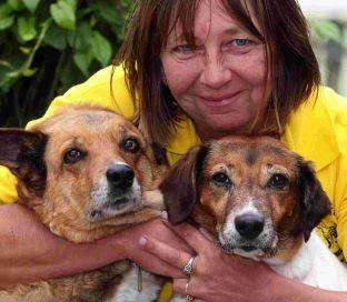 NEEDING CARE: Duty Manager of Waggy Tails Sue Carr with Susie the nine-year-old Jack Russell cross and Foxy a 12-year-old German Shepherd cross