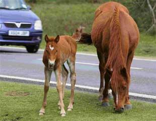 Bournemouth Echo: New Forest drivers urged to be safe