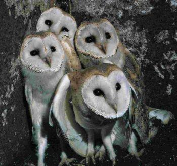 PROTECTION: Owl activities take place at Poole museum