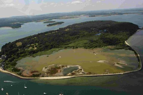 Brownsea Island: live in your living room